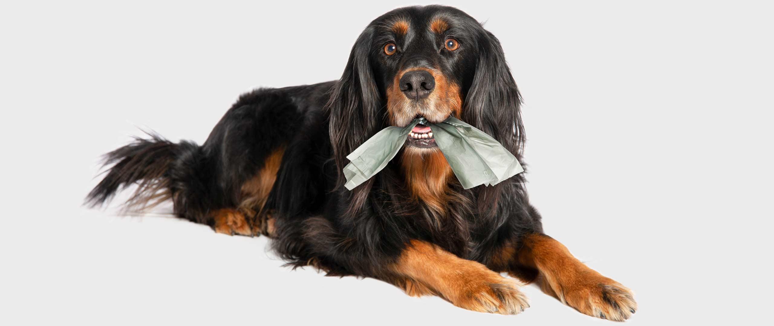 Gute Nachricht für Hundebesitzer!